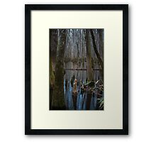 A Touch of Color – Congaree National Park, South Carolina Framed Print