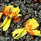 Tulip Poplar by Tracey Hampton