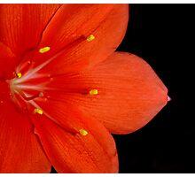 Orange Delight Photographic Print