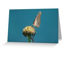 Butterfly 2 Greeting Card
