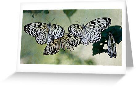 Butterfly 6 by David Clarke