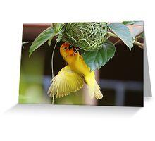 Golden Palm Weaver 5 Greeting Card