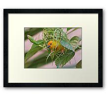 Golden Palm Weaver 7 Framed Print