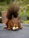 Red Squirrel 2 by David Clarke