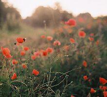 Morning on a farm by JOEPEPPER