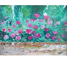 Peony walled garden Photographic Print