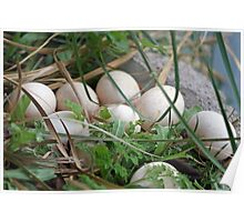 WHO LAID THESE EGGS! Poster