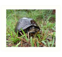 Box turtle in the rain Art Print