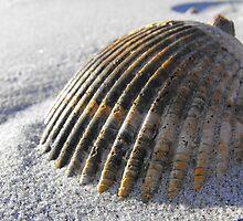 Seashell by Maris Stanley