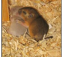 2 little gerbils - Cardamom and Thyme by Paola Svensson