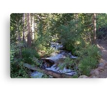 calvin and hobbes forest Canvas Print