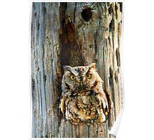 Screech-Owl Poster