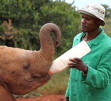 Last Little Elephant to Finish Feeding by Carole-Anne