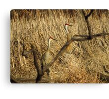 Sandhill Crane Pair Framed Canvas Print