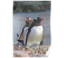 Pair of Gentoo Penguins on the Nest with Chicks Poster