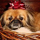 Decorate Your Dog Day! by Susan Bergstrom