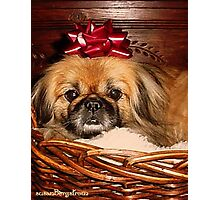 Decorate Your Dog Day! Photographic Print
