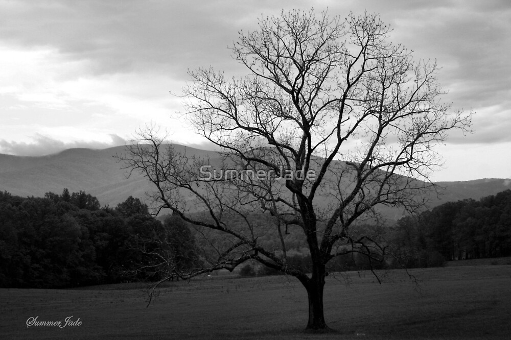 The Tree in the Field at Cades Cove by SummerJade