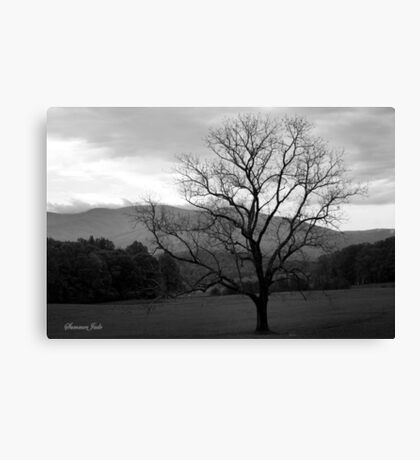 The Tree in the Field at Cades Cove Canvas Print