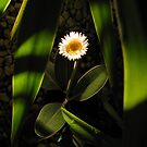 White flower by glenda1998