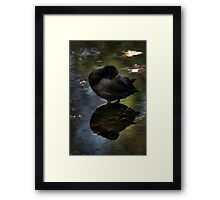 At Peace with Nature..... Framed Print