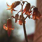 Orange flower by glenda1998