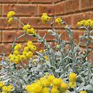 Yellow flowers by glenda1998