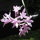 Pink flower 2 by glenda1998