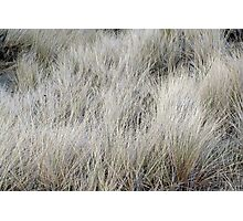 """Wind Blown Grass"" Photographic Print"