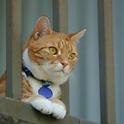 Angus Watching the Neighbours by Andrew Trevor-Jones