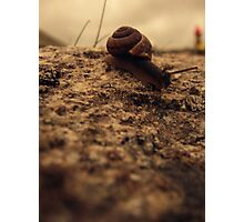 Snaily Photographic Print