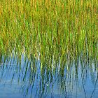 Reflection of Reeds - Abstract from Nature by Marilyn Harris