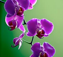 Purple on Green by olivia destandau