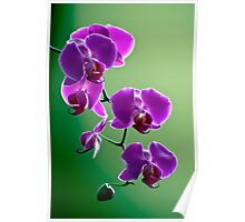 Purple on Green Poster