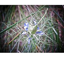 vegetal spider Photographic Print