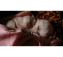 Little Angel sleeping  Photographic Print