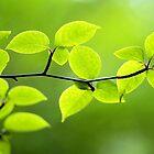 Foliage by Anaa