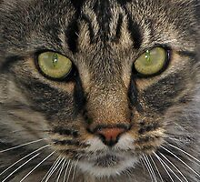 Tabby With Watchful Eyes by Jenny Brice