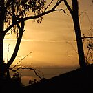 Trees silhouetted from the setting sun by lettie1957