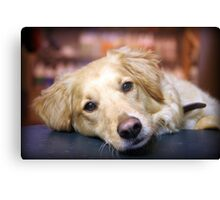 FOSTER Canvas Print