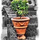 Tuscan Garden by Varinia   - Globalphotos