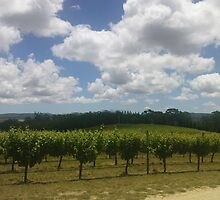 Vineyard in Barossa Valley by mmarshan
