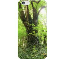 An Old Forest Bathed in Bright Light iPhone Case/Skin