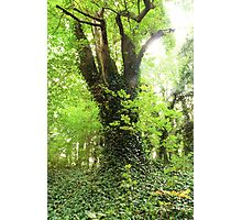 An Old Forest Bathed in Bright Light Photographic Print