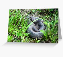 Copperhead Outside His Den Greeting Card
