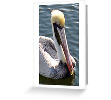 Tarpon Springs Pelican Greeting Card