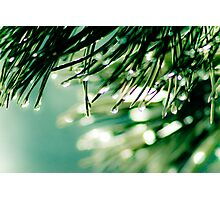 Weeping Pine Photographic Print