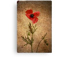 What's poppy doing? Canvas Print