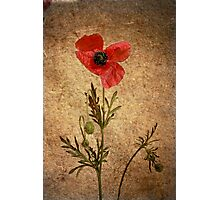 What's poppy doing? Photographic Print