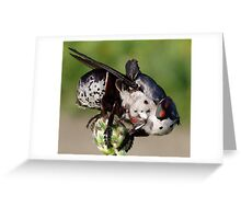 Botfly (Oestridae)  Greeting Card